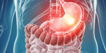 Echographe Pour Gastroentérologue / Gastroentérologie